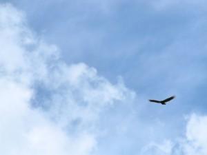 vrijheid vogel ontslag genomen